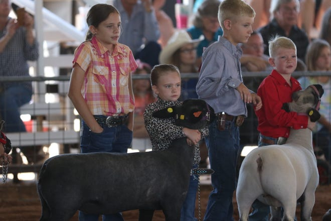 The booster lamb show is held, July 29, 2021 at the Eddy County Fair in Artesia.
