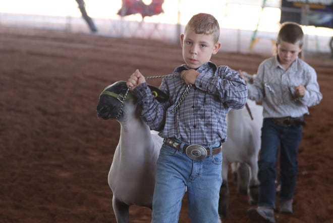 TJ Crook competes in the booster lamb show, July 29, 2021 at the Eddy County Fair in Artesia. Crook took home first place in the competition that provided lambs to the children for their first taste of livestock shows at the annual event.
