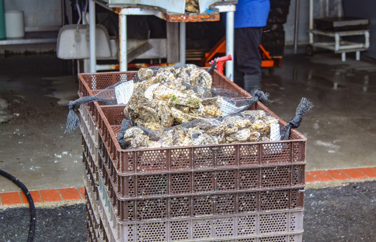 The farm is open to public tours and also for pick-up orders for oysters or muscles. Photo by Steve Puterski